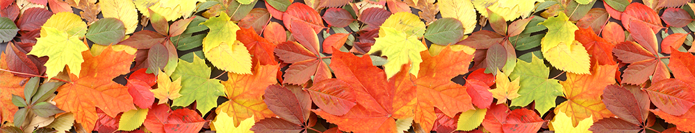Fall leaves of many colors from many different trees